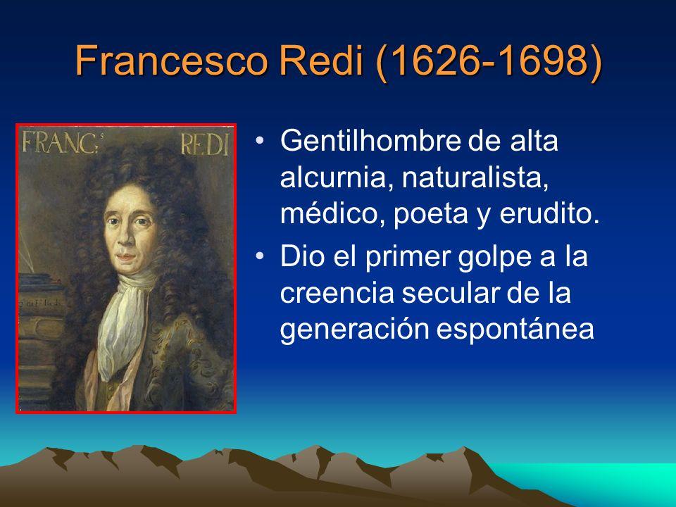 Francesco Redi (1626-1698) Gentilhombre de alta alcurnia, naturalista, médico, poeta y erudito. Dio el primer golpe a la creencia secular de la genera