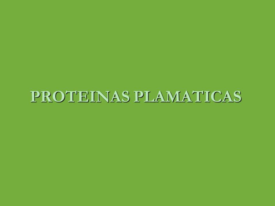 PROTEINAS PLASMATICAS ALBUMINA CARACTERISTICAS Madura humana consiste de una cadena polipeptídica de 585 aminoácidos Madura humana consiste de una cadena polipeptídica de 585 aminoácidos Posee 17 enlaces disulfuro Posee 17 enlaces disulfuro Proteasas( 3 dominios ) con funciones diferentes Proteasas( 3 dominios ) con funciones diferentes Forma elipsoide (no provoca aumento en la viscosidad del plasma como el fibrinogeno) Forma elipsoide (no provoca aumento en la viscosidad del plasma como el fibrinogeno) Responsable del 80 % de la presión coloide osmótica Responsable del 80 % de la presión coloide osmótica