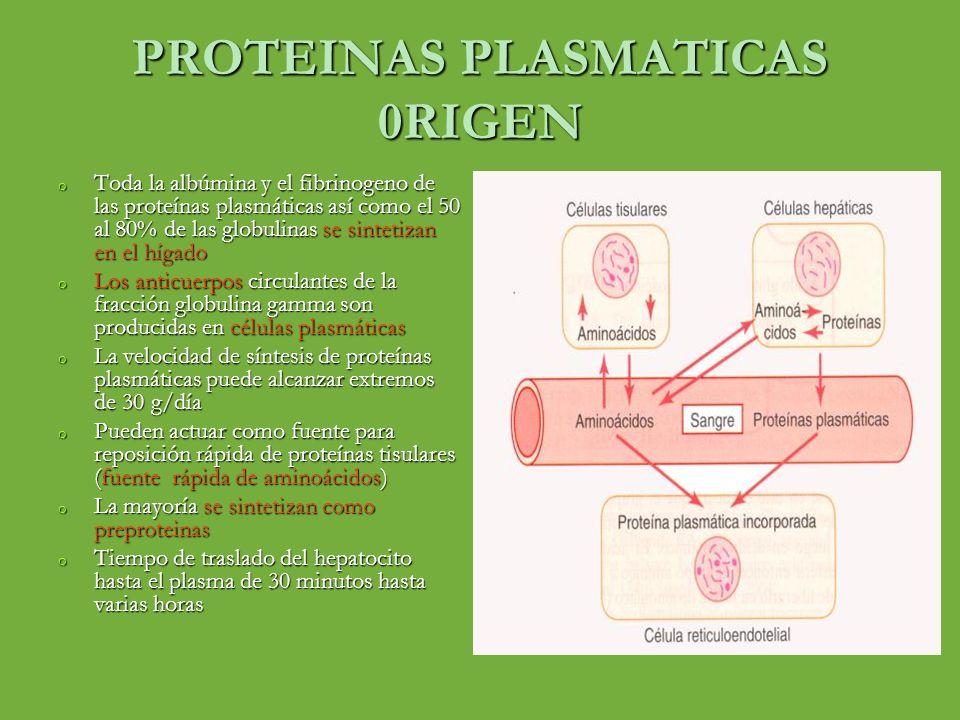 PROTEINAS PLASMATICAS 0RIGEN o Toda la albúmina y el fibrinogeno de las proteínas plasmáticas así como el 50 al 80% de las globulinas se sintetizan en