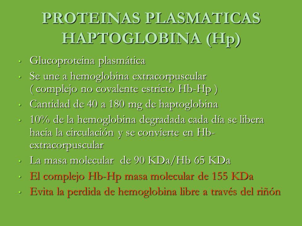 PROTEINAS PLASMATICAS HAPTOGLOBINA (Hp) Glucoproteina plasmática Glucoproteina plasmática Se une a hemoglobina extracorpuscular ( complejo no covalent