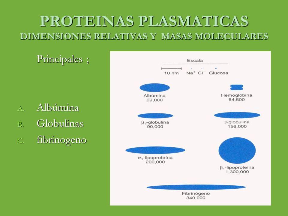 PROTEINAS PLASMATICAS DIMENSIONES RELATIVAS Y MASAS MOLECULARES Principales ; A. Albúmina B. Globulinas C. fibrinogeno