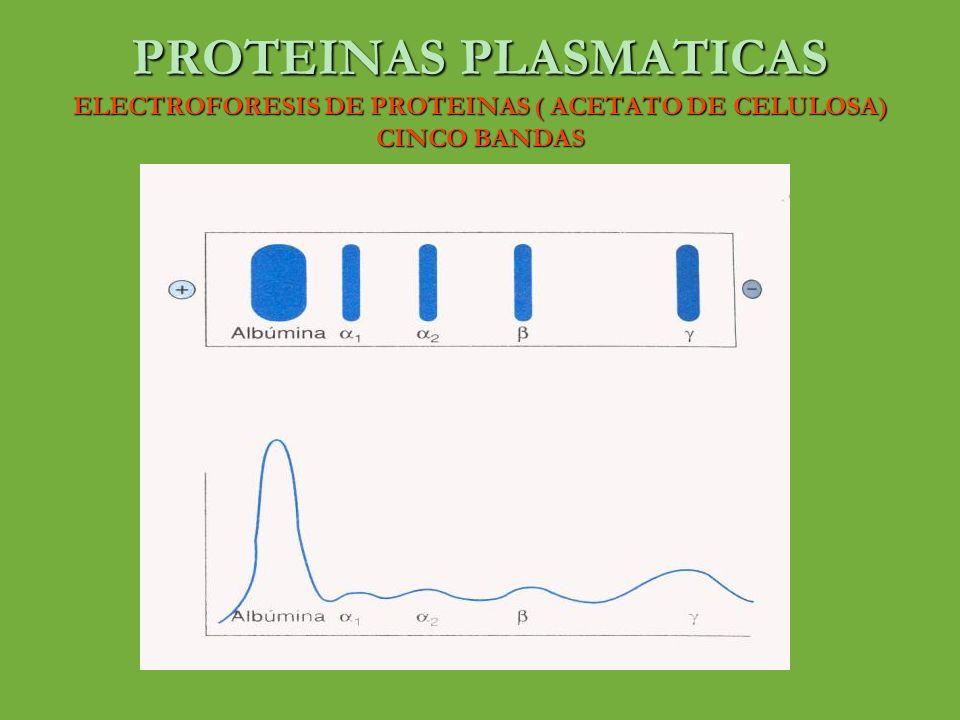 PROTEINAS PLASMATICAS CERULOPLASMINA o Proteína de casi 160 KDa o Es una alfa 2 – globulina o Color azul debido a su alto contenido de cobre o Transporta el 90% de cobre presente en el plasma o Cada molécula se une a seis átomos de cobre en forma intima o Muestra actividad oxidasa dependiente de cobre o Disminuye en caso de enfermedad hepática