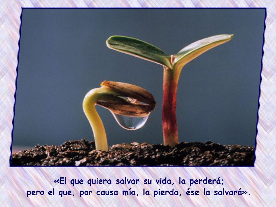 Ya en esta tierra podemos experimentar que, si nos donamos, si amamos concretamente, crece en nosotros la vida.