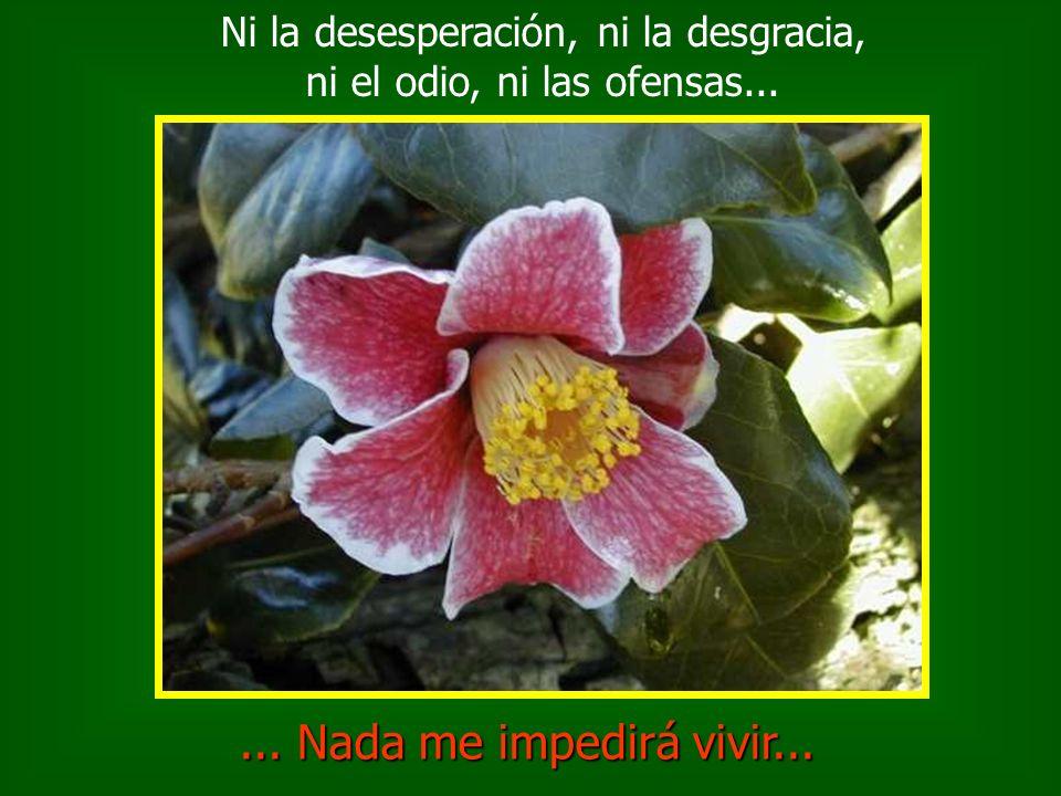 Ni la desesperación, ni la desgracia, ni el odio, ni las ofensas...... Nada me impedirá vivir...
