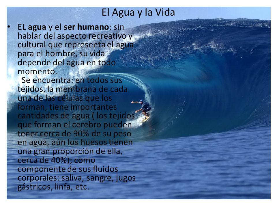 El Agua y la Vida EL agua y el ser humano: sin hablar del aspecto recreativo y cultural que representa el agua para el hombre, su vida depende del agu