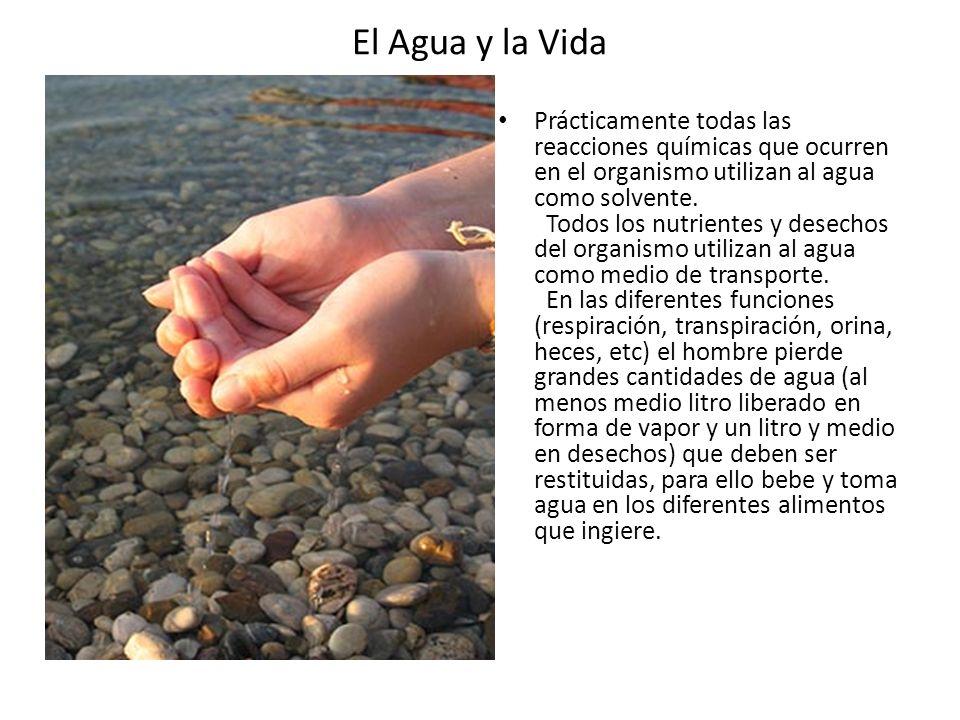 El Agua y la Vida Prácticamente todas las reacciones químicas que ocurren en el organismo utilizan al agua como solvente. Todos los nutrientes y desec
