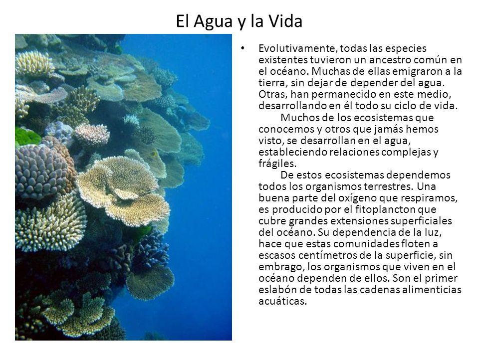 El Agua y la Vida Evolutivamente, todas las especies existentes tuvieron un ancestro común en el océano. Muchas de ellas emigraron a la tierra, sin de
