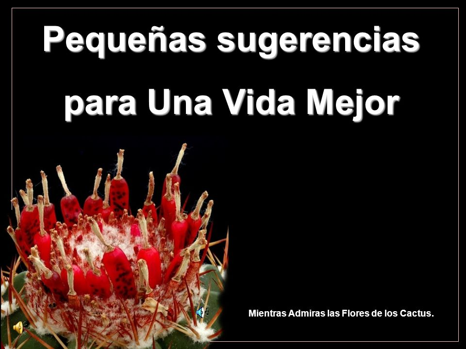 Pequeñas sugerencias para Una Vida Mejor Mientras Admiras las Flores de los Cactus.
