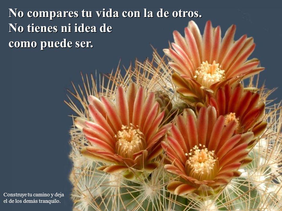 No compares tu vida con la de otros.No tienes ni idea de como puede ser.