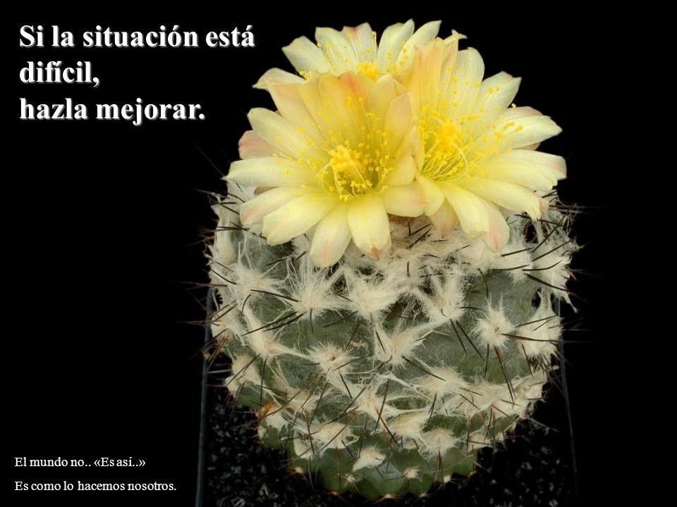 Si la situación está difícil, hazla mejorar. El mundo no.. «Es así..» Es como lo hacemos nosotros.