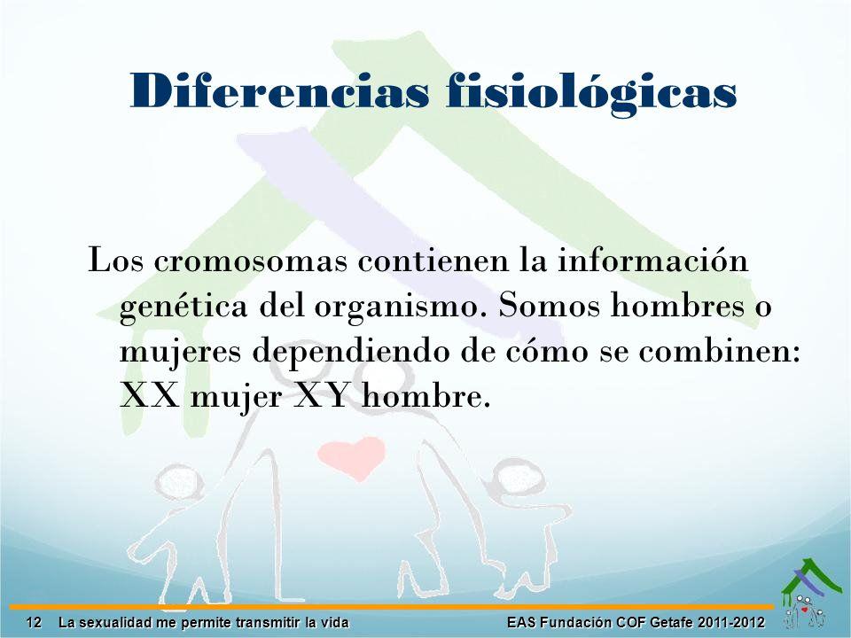 12 EAS Fundación COF Getafe 2011-2012 La sexualidad me permite transmitir la vida Diferencias fisiológicas Los cromosomas contienen la información gen