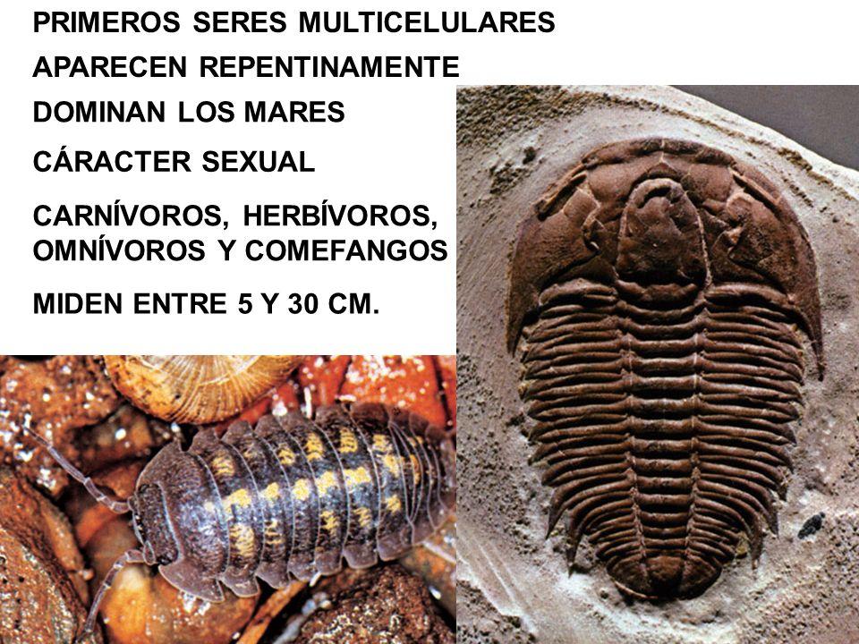 ABUNDAN LOS GUSANOS DE MAR Y LAS MEDUSAS