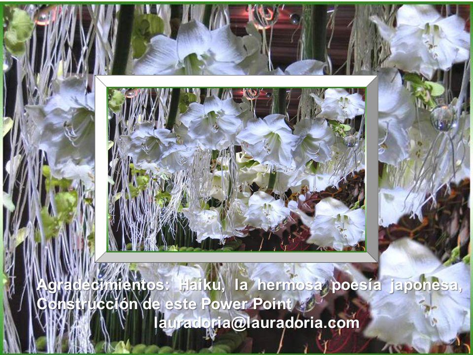 Agradecimientos: Haiku, la hermosa poesía japonesa, Construcción de este Power Point lauradoria@lauradoria.com lauradoria@lauradoria.com