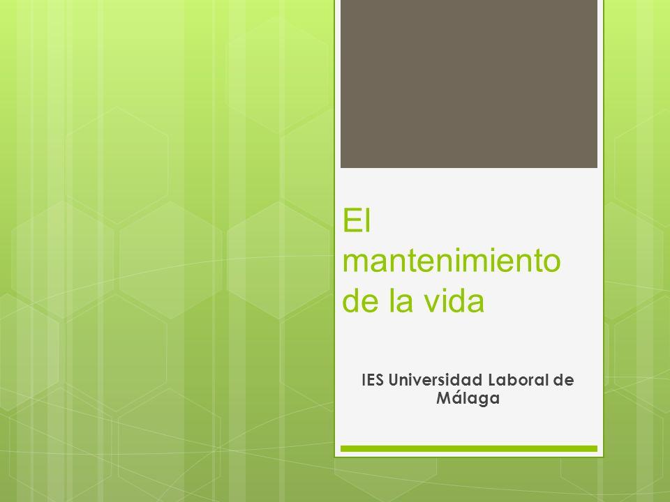El mantenimiento de la vida IES Universidad Laboral de Málaga