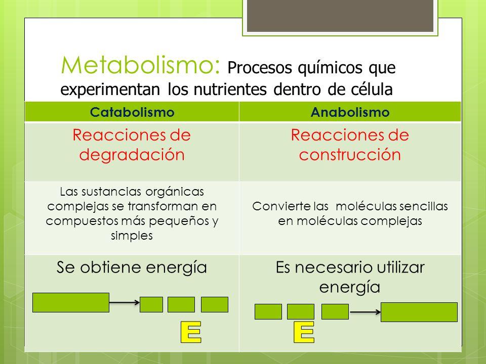 Metabolismo: Procesos químicos que experimentan los nutrientes dentro de célula CatabolismoAnabolismo Reacciones de degradación Reacciones de construc