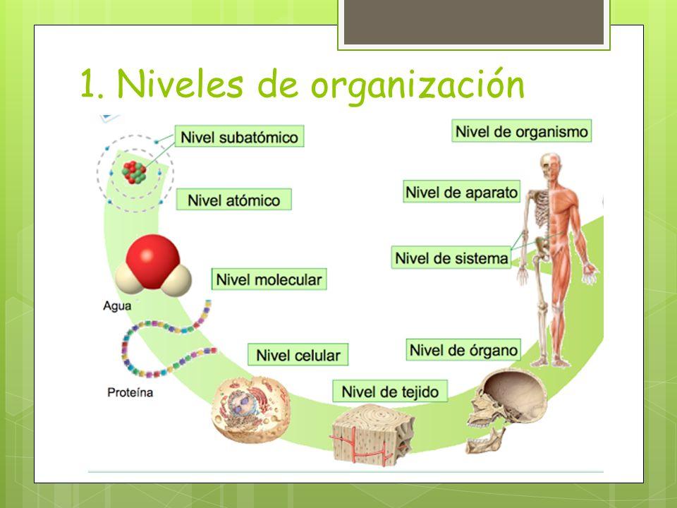1. Niveles de organización