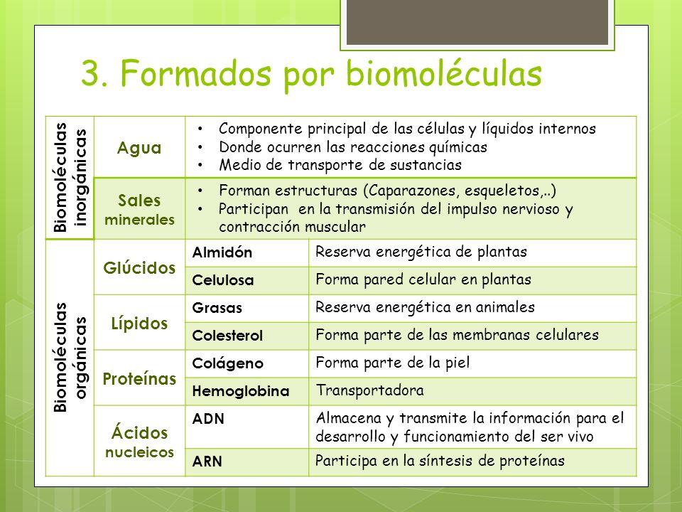 3. Formados por biomoléculas Biomoléculas inorgánicas Agua Componente principal de las células y líquidos internos Donde ocurren las reacciones químic