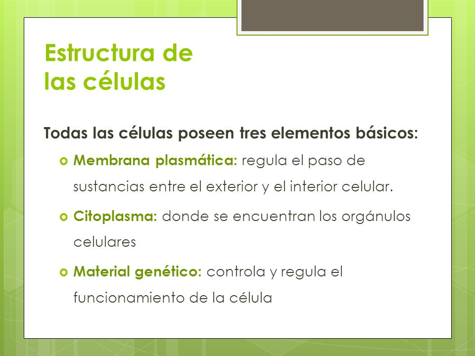 Estructura de las células Todas las células poseen tres elementos básicos: Membrana plasmática: regula el paso de sustancias entre el exterior y el in