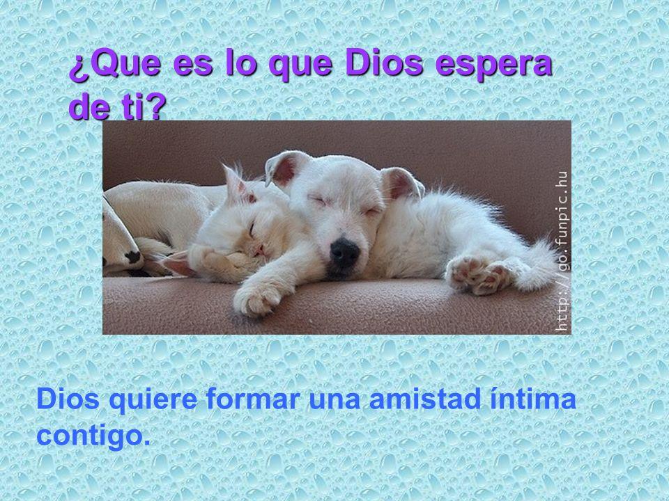 Dios quiere formar una amistad íntima contigo. ¿Que es lo que Dios espera de ti?