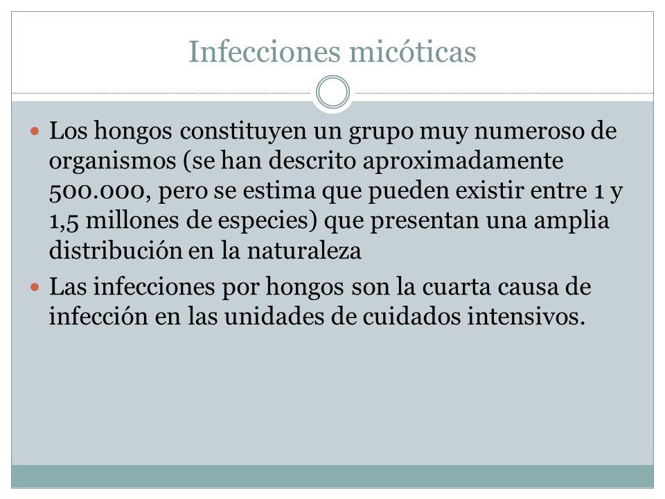 Infecciones micóticas Los hongos constituyen un grupo muy numeroso de organismos (se han descrito aproximadamente 500.000, pero se estima que pueden e