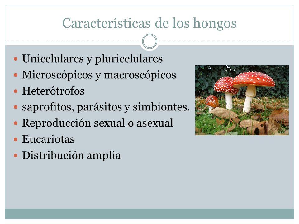 Características de los hongos Unicelulares y pluricelulares Microscópicos y macroscópicos Heterótrofos saprofitos, parásitos y simbiontes. Reproducció