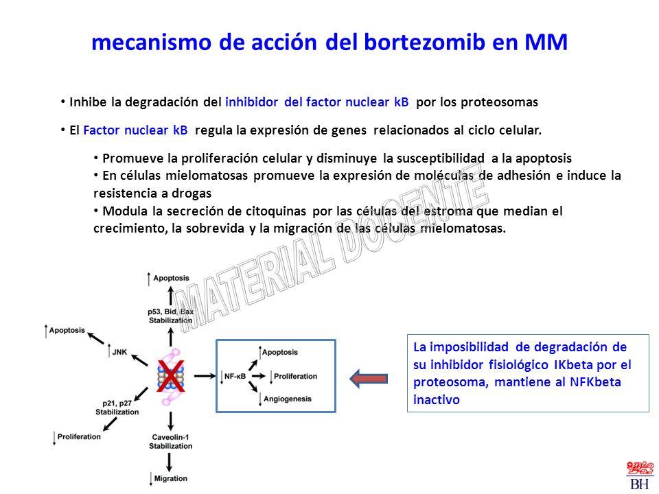 mecanismo de acción del bortezomib en MM Inhibe la degradación del inhibidor del factor nuclear kB por los proteosomas El Factor nuclear kB regula la