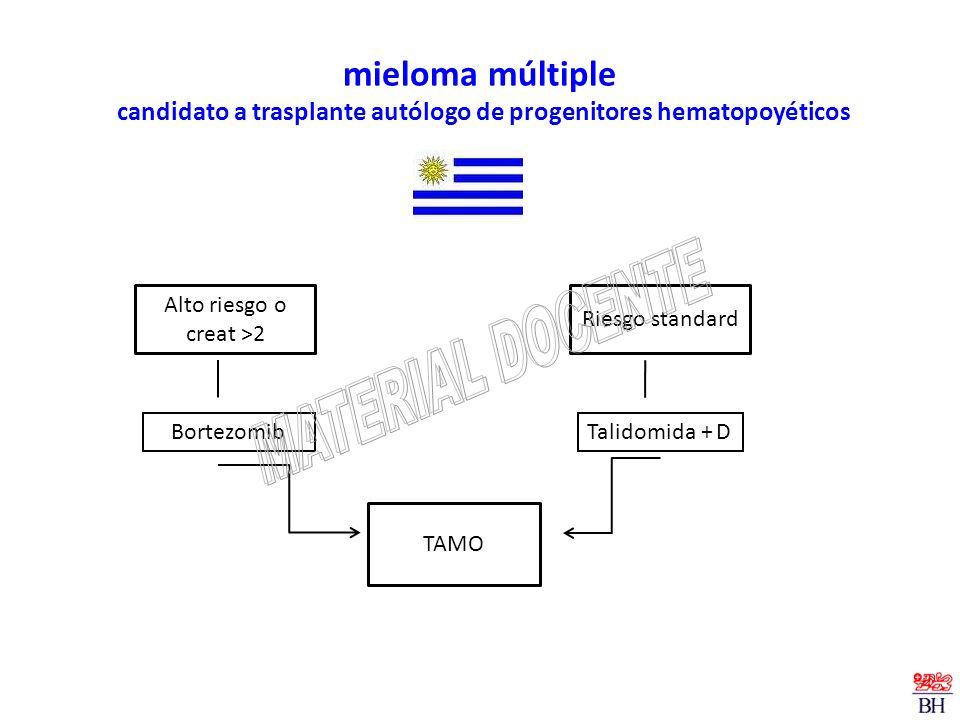 mieloma múltiple candidato a trasplante autólogo de progenitores hematopoyéticos Talidomida + D Alto riesgo o creat >2 Riesgo standard Bortezomib TAMO