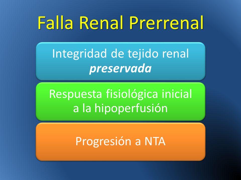 Falla Renal Prerrenal Integridad de tejido renal preservada Respuesta fisiológica inicial a la hipoperfusión Progresión a NTA