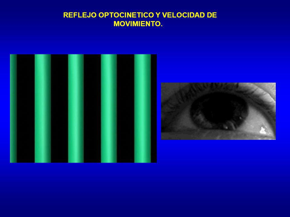 REFLEJO OPTOCINETICO Y VELOCIDAD DE MOVIMIENTO.