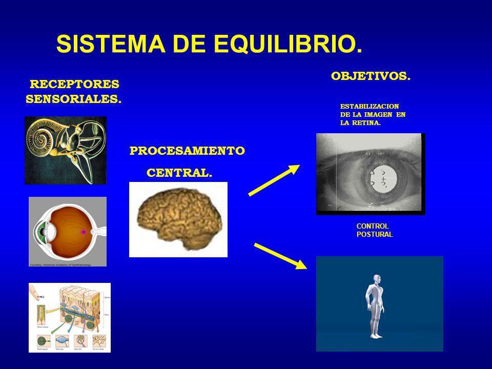 SISTEMA DE EQUILIBRIO. RECEPTORES SENSORIALES. PROCESAMIENTO CENTRAL. OBJETIVOS. ESTABILIZACION DE LA IMAGEN EN LA RETINA. CONTROL POSTURAL