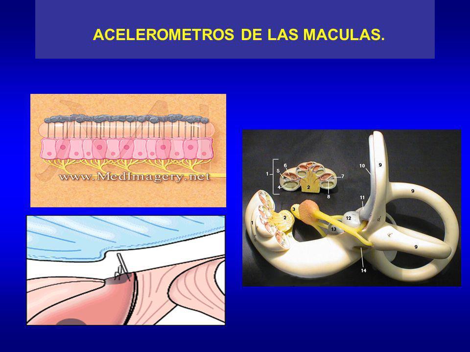ACELEROMETROS DE LAS MACULAS.