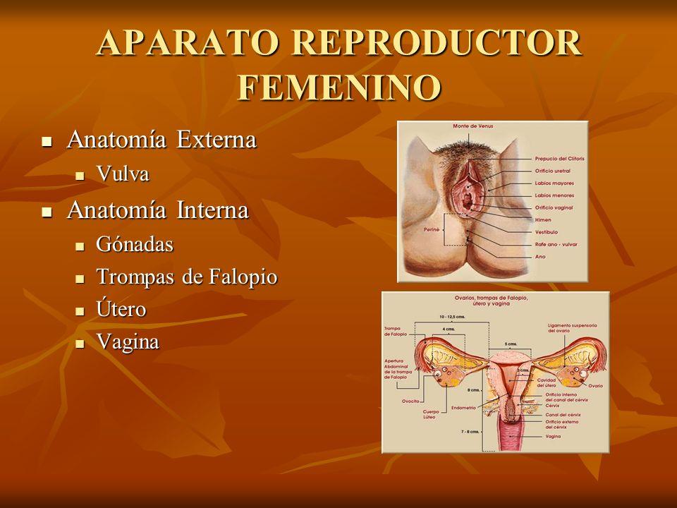 APARATO REPRODUCTOR FEMENINO Anatomía Externa Anatomía Externa Vulva Vulva Anatomía Interna Anatomía Interna Gónadas Gónadas Trompas de Falopio Trompa