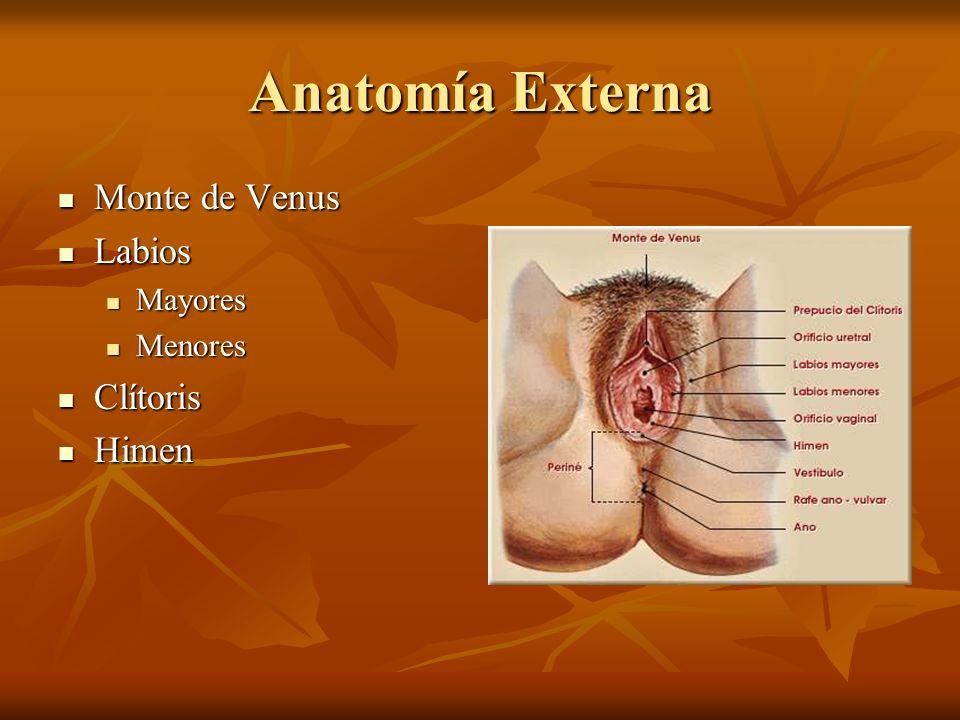 Anatomía Externa Monte de Venus Monte de Venus Labios Labios Mayores Mayores Menores Menores Clítoris Clítoris Himen Himen