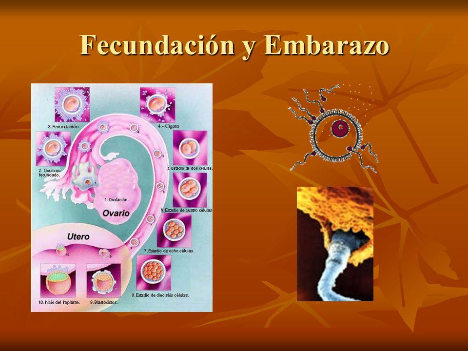 Métodos Anticonceptivos Método Ogino Método Ogino Preservativo Preservativo Diafragma Diafragma Espermicidas Espermicidas Píldora Anovulatoria Píldora Anovulatoria