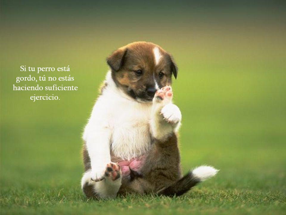 La razón por la cual los perros tienen tantos amigos es porque mueven sus colas.... en lugar de sus lenguas.