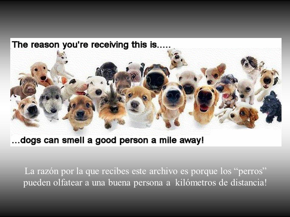 Los perros no son todo en nuestra vida, pero ellos la hacen completa. Roger Caras