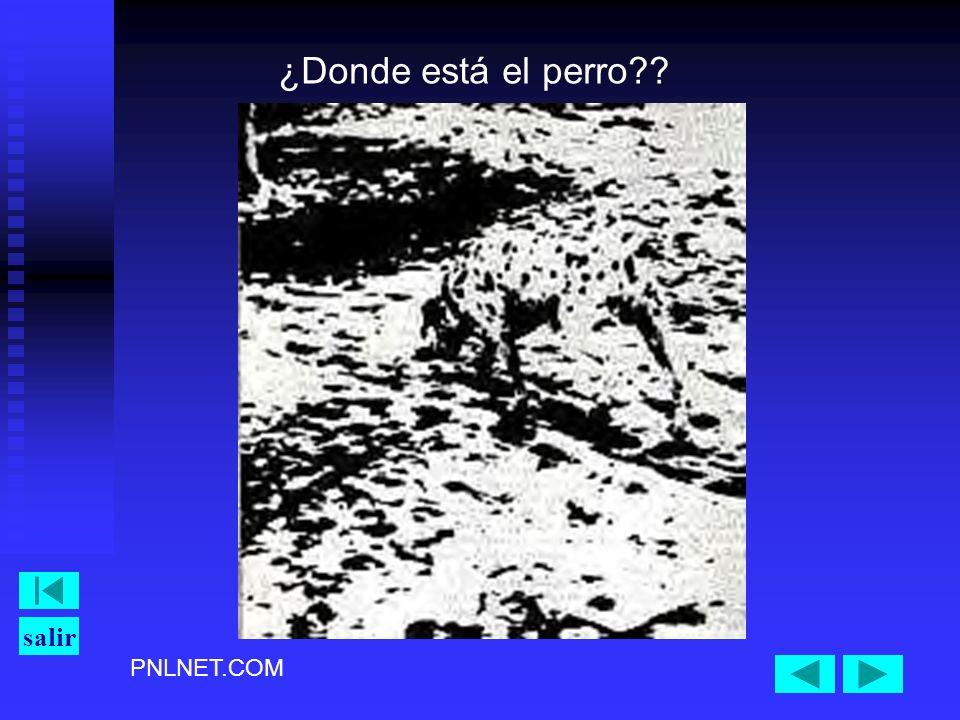 PNLNET.COM salir ¿Donde está el perro??