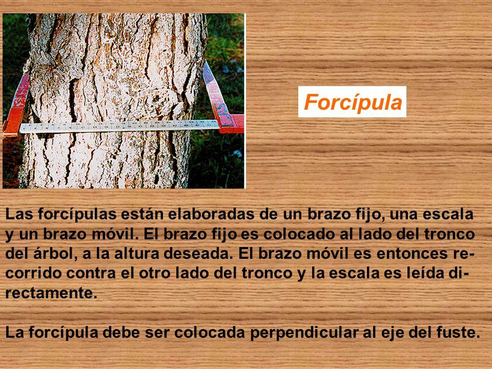 Forcípula Las forcípulas están elaboradas de un brazo fijo, una escala y un brazo móvil. El brazo fijo es colocado al lado del tronco del árbol, a la