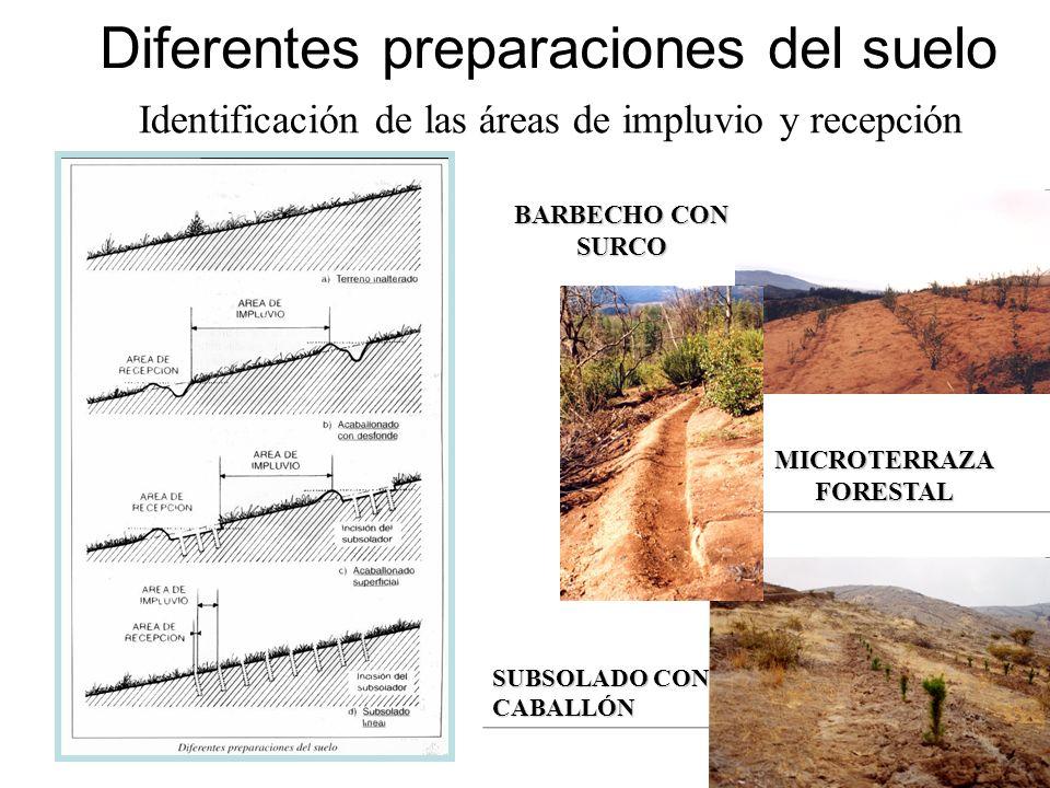 Diferentes preparaciones del suelo BARBECHO CON SURCO SUBSOLADO CON CABALLÓN MICROTERRAZA FORESTAL Identificación de las áreas de impluvio y recepción