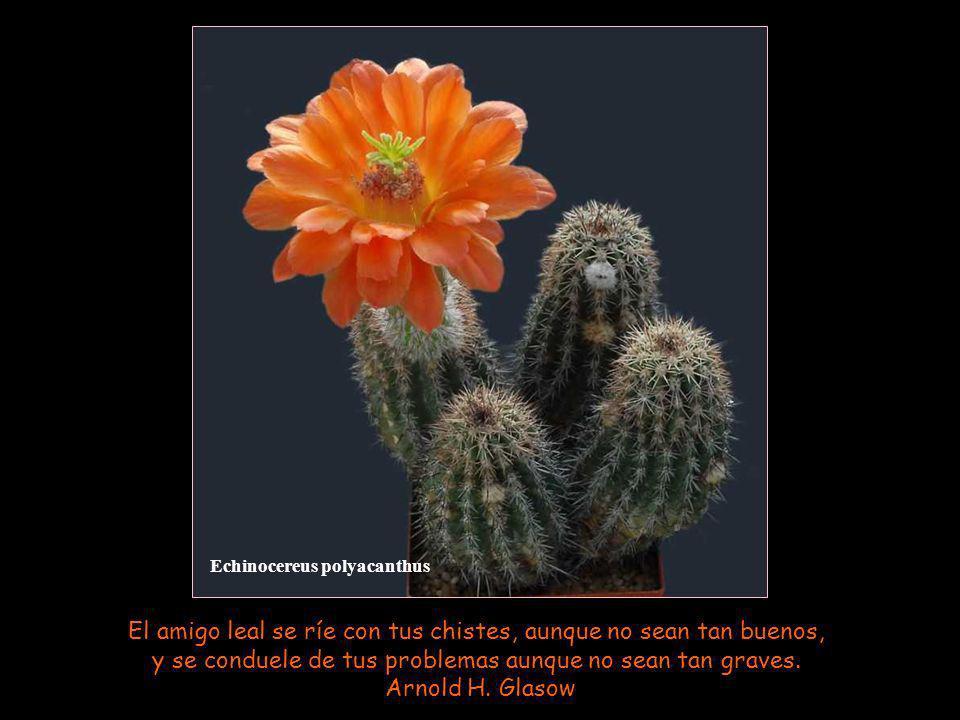 Oroya peruviana La amistad no puede ir muy lejos cuando ni unos ni otros están dispuestos a perdonarse los pequeños defectos.