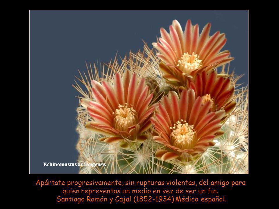 Echinocereus subinermis Quien no buscó amigos en la alegría, en la desgracia no los pida. Refrán