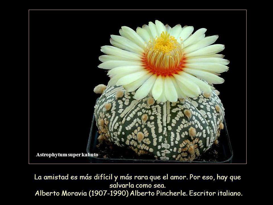 Astrophytum super kabuto La amistad es más difícil y más rara que el amor.