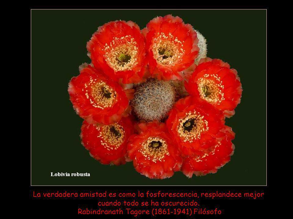 Lobivia robusta La verdadera amistad es como la fosforescencia, resplandece mejor cuando todo se ha oscurecido.