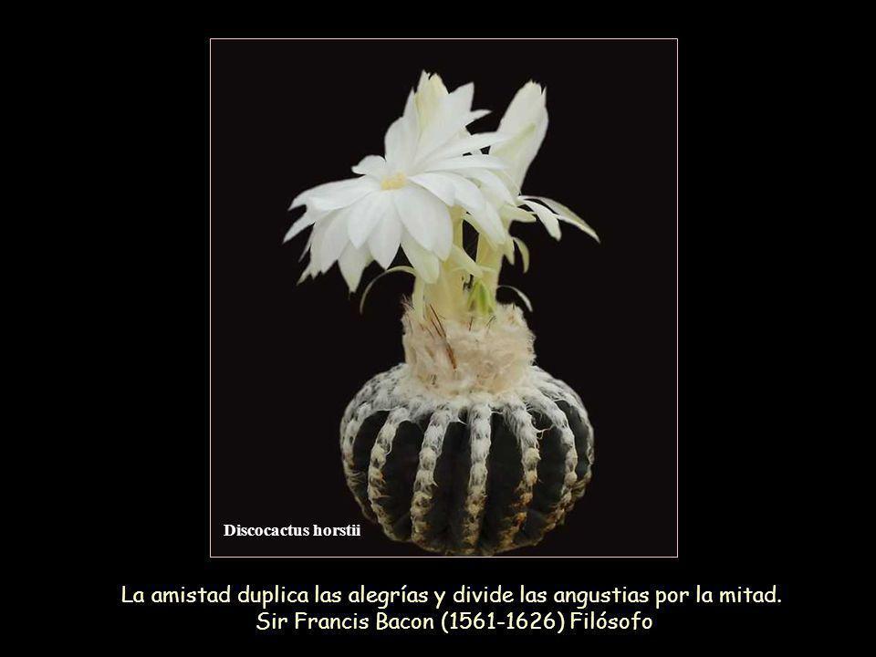 Discocactus pugionacanthus Los amigos se convierten con frecuencia en ladrones de nuestro tiempo.