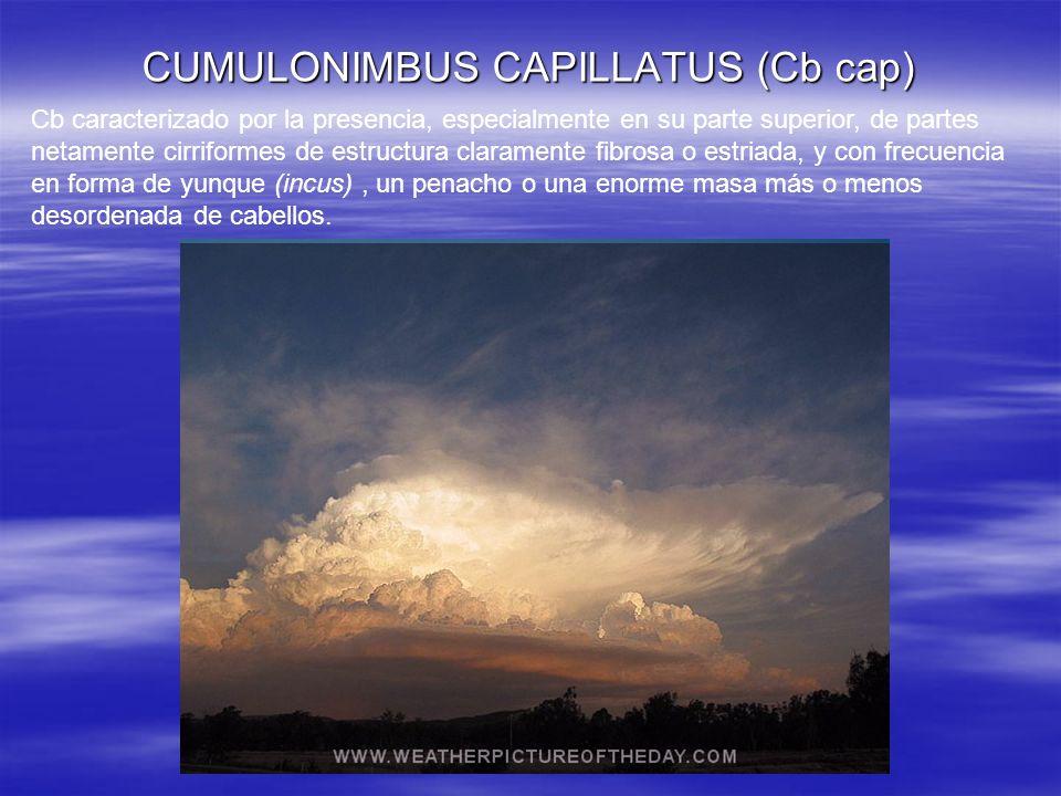 CUMULONIMBUS CAPILLATUS (Cb cap) Cb caracterizado por la presencia, especialmente en su parte superior, de partes netamente cirriformes de estructura