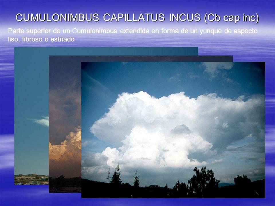 CUMULONIMBUS CAPILLATUS INCUS (Cb cap inc) Parte superior de un Cumulonimbus extendida en forma de un yunque de aspecto liso, fibroso o estriado