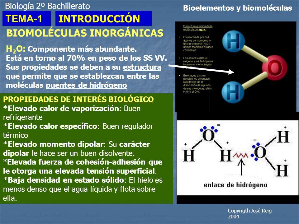 Biología 2º Bachillerato Bioelementos y biomoléculas BIOMOLÉCULAS INORGÁNICAS H 2 O: Componente más abundante. Está en torno al 70% en peso de los SS