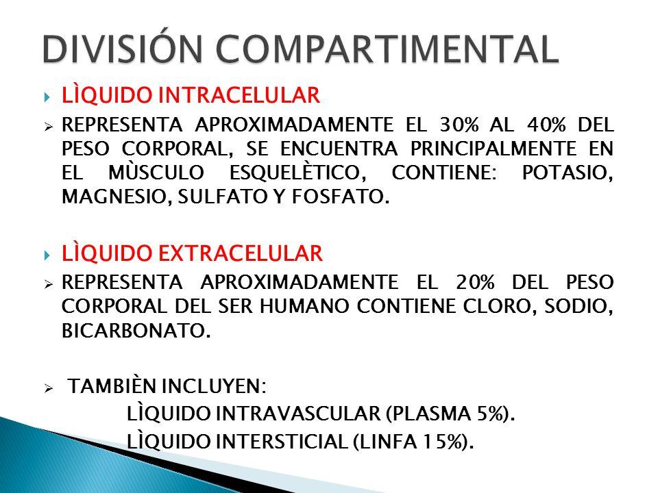 TRANSCELULAR (1,5%): LOS LÍQUIDOS DEL: ÁRBOL TRAQUEOBRONQUIAL.