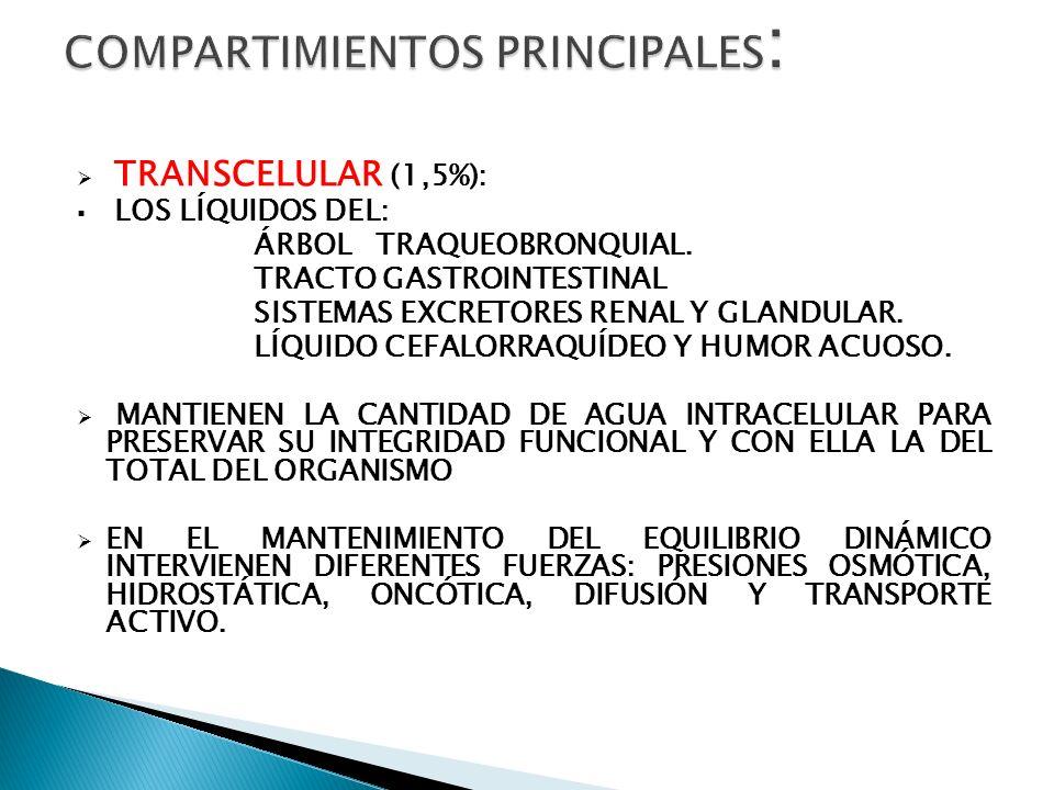 TRANSCELULAR (1,5%): LOS LÍQUIDOS DEL: ÁRBOL TRAQUEOBRONQUIAL. TRACTO GASTROINTESTINAL SISTEMAS EXCRETORES RENAL Y GLANDULAR. LÍQUIDO CEFALORRAQUÍDEO
