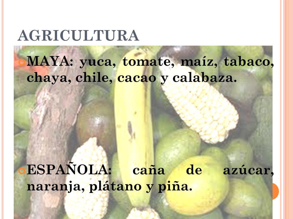 AGRICULTURA MAYA: yuca, tomate, maíz, tabaco, chaya, chile, cacao y calabaza. ESPAÑOLA: caña de azúcar, naranja, plátano y piña.